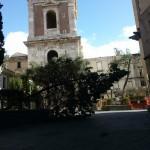 Albero cade a Santa Chiara