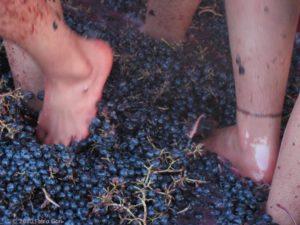 ppigiatura-del-vino
