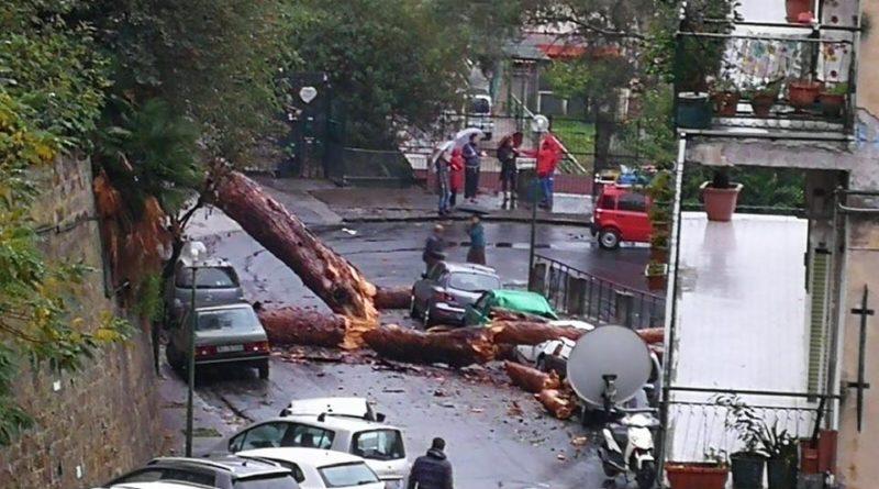 Cade Albero in viale Letizia, auto in sosta distrutte, «Poteva verificarsi una tragedia»